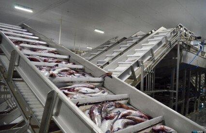 Границы ТОР «Камчатка» раздвинут ради рыбопереработки