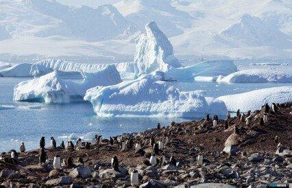 Коронавирус вмешался в исследования Антарктиды