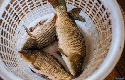 Рыбий корм попробуют производить из воздуха