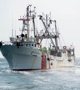 Японских браконьеров оштрафовали на 6 миллионов